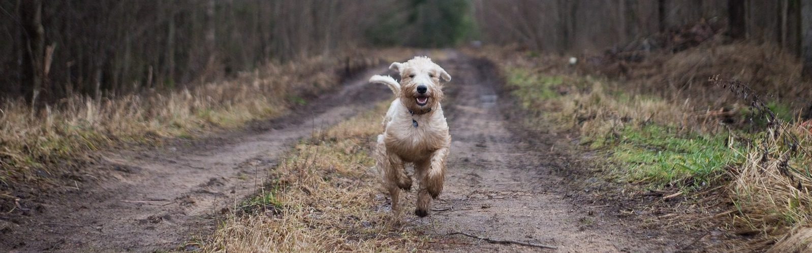 Rennende hond in bos